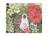 Poinsettias Giclee Print by Hilary Jones