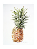 Pineapple, 1997 Giclee Print by Alison Cooper