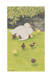 Mother Duck with Ducklings Giclee Print by Linda Benton