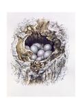 Bubo Bubo (Barn Owl), 2001 Giclee Print by Sandra Lawrence