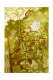 Rose Giclee Print by Valerie Daniel