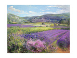 Lavender Fields in Old Provence Giclee Print by Timothy Easton