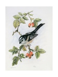 Long-Tailed Tit and Rosehips Giclee Print by Nell Hill