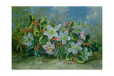 Christmas Roses and Holly Giclee Print by Albert Williams
