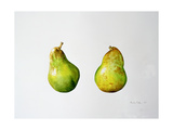 A Pair of Pears, 1997 Giclee Print by Alison Cooper