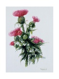 Scottish Thistle Giclee Print by Nell Hill