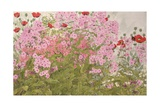 Pink Phlox and Poppies with a Butterfly Giclee Print by Linda Benton