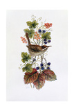 Wren on a Spray of Berries Giclee Print by Nell Hill