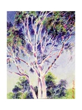 Gum Tree, Australia Giclee Print by Robert Tyndall