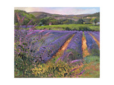 Buddleia and Lavender Field, Montclus, 1993 Giclee Print by Timothy Easton