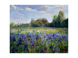 Evening at the Iris Field Giclee Print by Timothy Easton