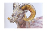 American Long Horn, 2004 Giclee Print by Lou Gibbs