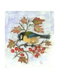 Blue Tit on Hawthorn Giclee Print by Nell Hill