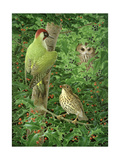 Woodpecker, Owl and Thrush Giclee Print by Birgitte Hendil