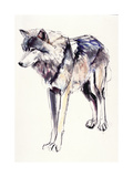 Alpha Giclee Print by Mark Adlington