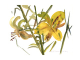 Lilies, 1987 Giclee Print by Claudia Hutchins-Puechavy