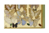 Les Papillons de N.C., 2006 Giclee Print by Delphine D. Garcia