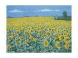 Field of Sunflowers, 2002 Giclee Print by Alan Byrne