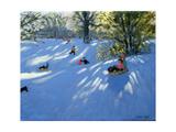 Early Snow, Darley Park, Derby Impressão giclée por Andrew Macara