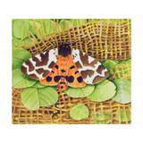 Tiger Moth, 1999 Giclee Print by E.B. Watts