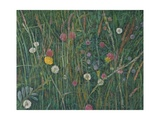 Plants of the Machair, 2008 Giclee Print by Ruth Addinall