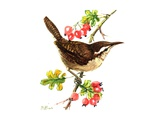 Wren and Rosehips Giclee Print by Nell Hill