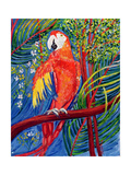 Pretty Polly Giclee Print by Patricia Eyre