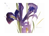 Iris, 1987 Giclee Print by Claudia Hutchins-Puechavy