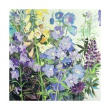 Delphiniums and Foxgloves Giclee Print by Claire Spencer