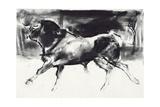 Black Bull Giclee Print by Mark Adlington
