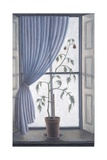 Plant in Window, 2003 Giclee Print by Ruth Addinall