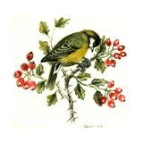 Great Tit on Hawthorn Giclee Print by Nell Hill