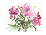 Peonies, 2004 Giclee Print by Claudia Hutchins-Puechavy