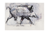 Young Boar, Bialowieza, Poland Giclee Print by Mark Adlington