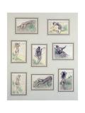 Untitled Giclee Print by Yolanda Sonnabend