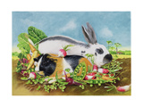 Rabbit and Guinea Pig, 1998 Giclee Print by E.B. Watts