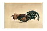 Brown-Breasted Red Bantam, 1985 Giclee Print by Mary Clare Critchley-Salmonson