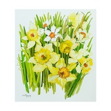 Daffodils and Narcissus Giclee Print by Joan Thewsey