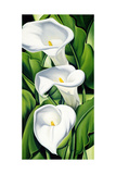 Lilies, 2002 Giclee Print by Catherine Abel