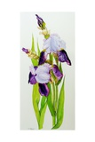 Mauve and Purple Irises with Two Buds Giclee Print by Joan Thewsey
