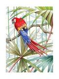 Parrot, 2008 Giclee Print by Jenny Barnard