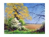 Blackthorn Winter, 2003 Giclee Print by Anthony Rule