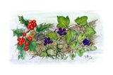 Log of Ivy, Holly and Hazelnuts Giclee Print by Nell Hill