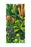 Foliage III, 2005 Giclee Print by Catherine Abel