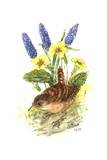 Wren in Primroses Giclee Print by Nell Hill
