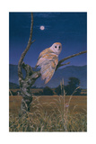 Barn Owl Giclee Print by Simon Cook