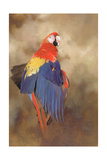 Parrot, 2000 Giclee Print by Odile Kidd