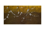 Flowering Blackthorn 4, 2008 Giclee Print by Richard Pomeroy