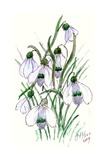 Snowdrops Giclee Print by Nell Hill
