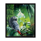 African Grey Parrot, 1990 Giclee Print by Sandra Lawrence